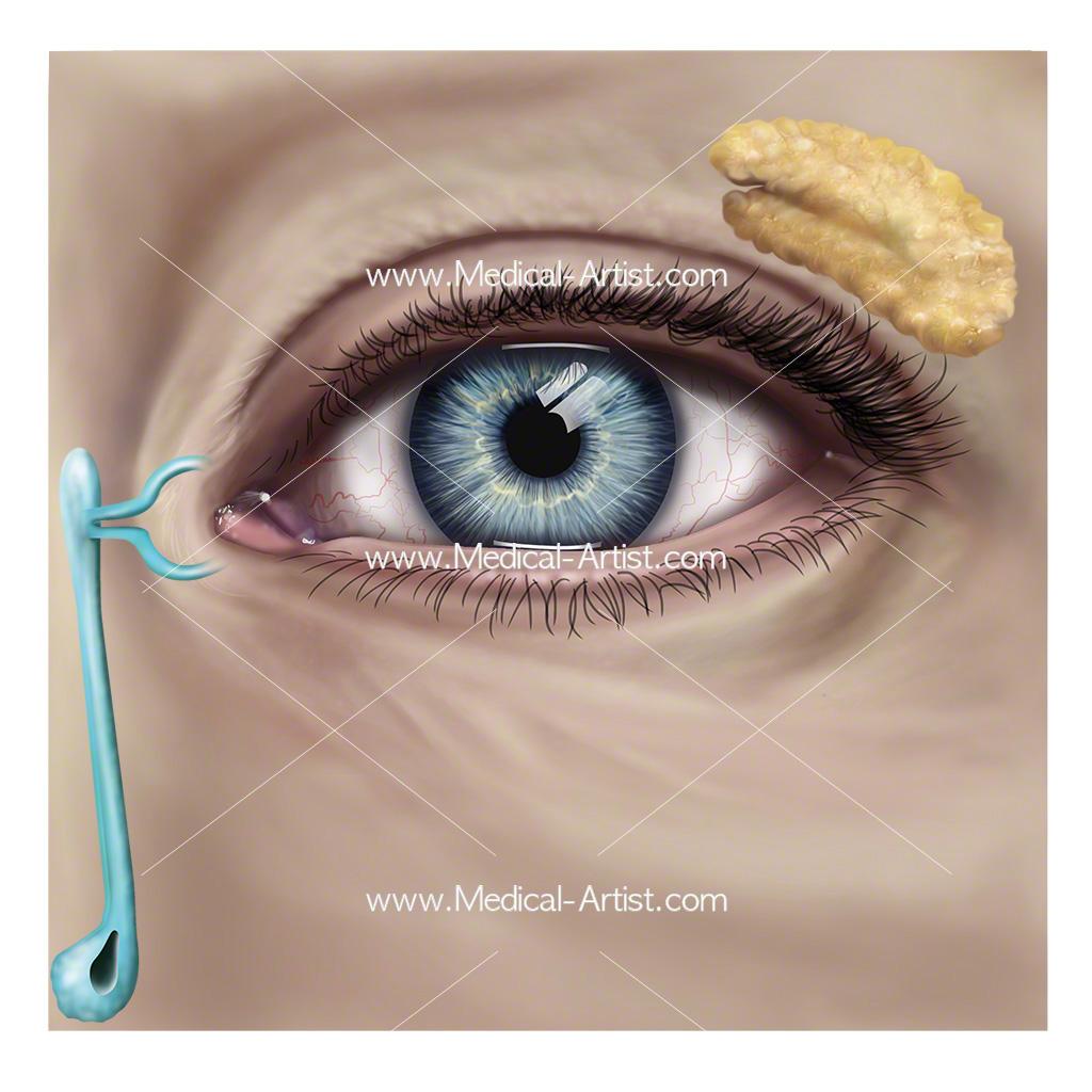 Exelent Human Anatomy Eyes Ideas - Human Anatomy Images ...