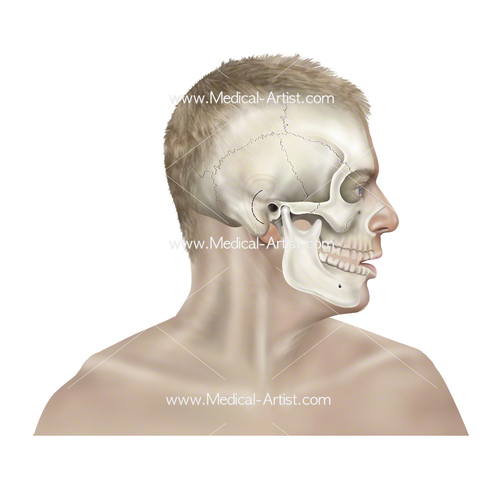 anatomy of hearing including ear structures Anatomy special senses, part 2 (hearing and balance) the ear: hearing and balance see for eyes and vision:  ear structures not involved with hearing,.