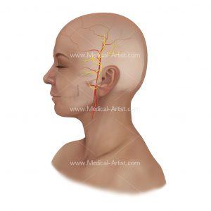 Auriculotemporal nerve