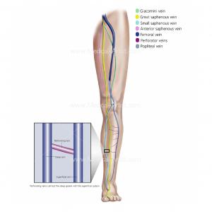 Perforating vein